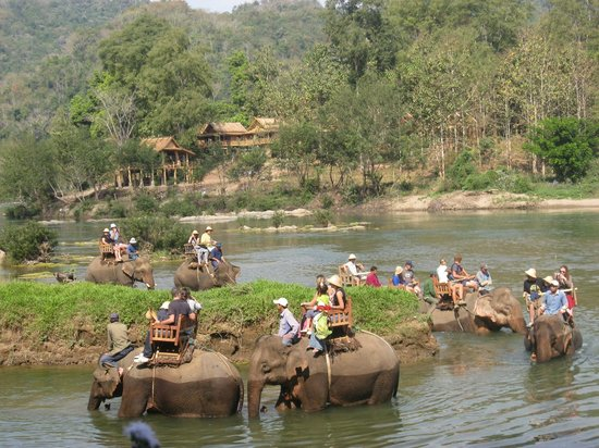 Elephant Riding Luang Prabang